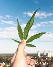 IREM Course: Legalized Marijuana & Commercial Real Estate: What You Need to Know