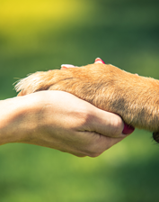 IREM Course: Emotional Support Animals: Best Practices for Managing Resident Requests